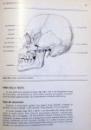 ANATOMIA E FISIOLOGIA DELL`UOMO di LUIGI CATTANEO , 1990