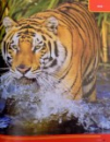ATLASUL ANIMALELOR SALBETICE , UIMITOARELE ANIMALE ALE PLANETEI SI UNDE TRAIESC