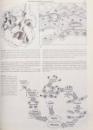 HARRISON ' S , PRINCIPLES OF INTERNAL MEDICINE de EUGENE BRAUNWALD ... ANTHONY S. FAUCI , 1987