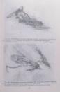 VASCULARIZATIA SI INERVATIA ARTICULATIILOR OMULUI de VASILE ANDRIES , SILVIA NEGHINA , TATIANA IASTREBOVA , TUDOR LUPASCU , 2000