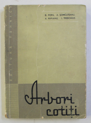 ARBORI COTITI de POPA BAZIL ... TREBONIUS ION , 1960