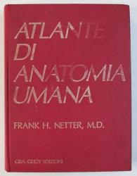 ATALNTE DI ANATOMIA UMANA di FRANK H . NETTER , 1990