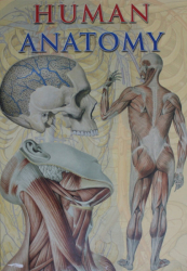 HUMAN ANATOMY , 2006 *60CM X 43CM