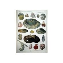 Abbildungen zu Oken's  Ilustratii la istoria naturala a lui Oken