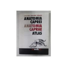 ANATOMIA CAPREI - ATLAS , TEXT SI EXPLICATII IN LIMBA LATINA de GABRIEL PREDOI ...CRISTIAN BELU , 2001