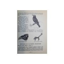 DAUNATORI AI VANATULUI SI COMBATEREA LOR ( RAPITOARE CU PAR SI CU PENE ) de ING. M. BODEA , I. CIRCIU , D. RADU , 1962