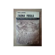 FAUNA FOSILA DIN OLIGOCENUL DE LA PIATRA NEAMT de MIHAI CIOBANU , 1977