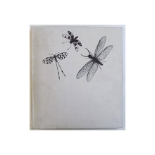 INSECTS  - THEIR BIOLOGY AND CULTURAL HISTORY by BERNHARD KLAUSNITZER , photos by MANFRED FORSTER , 1987