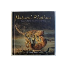 NATURAL RHYTHMS, WILDLIFE ACTIONS AND INTERACTIONS