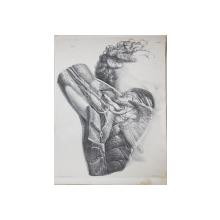 PLANSA ANATOMICA CU SECTIUNE PRIN MUSCHI desenata de N. H. JACOB ( 1782 - 1871 )  , GRAVURA , MIJLOCUL SECOLULUI XIX