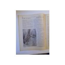 REVISTA CARPATII, VANATOARE, PESCUIT, CHINOLOGIE, ANUL IX , 15 NOIEMBRIE CLUJ 1941, NR. 11